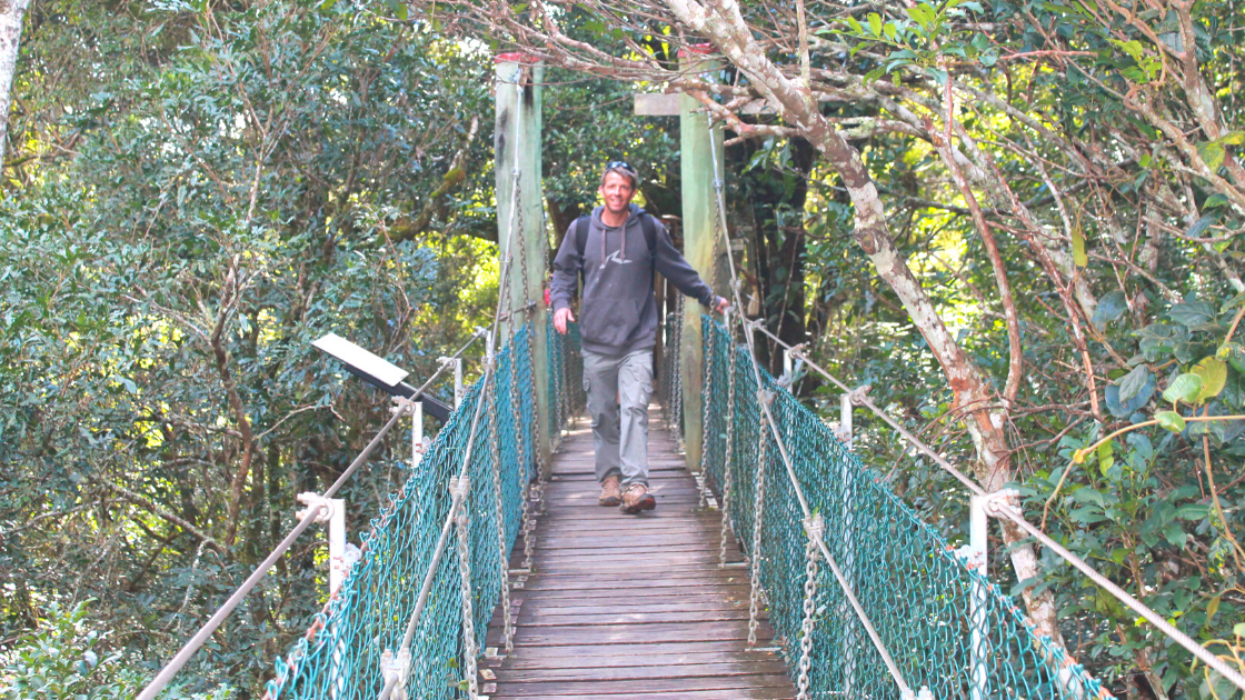 5 Reasons to Visit O'Reilly's Tree Top Walk