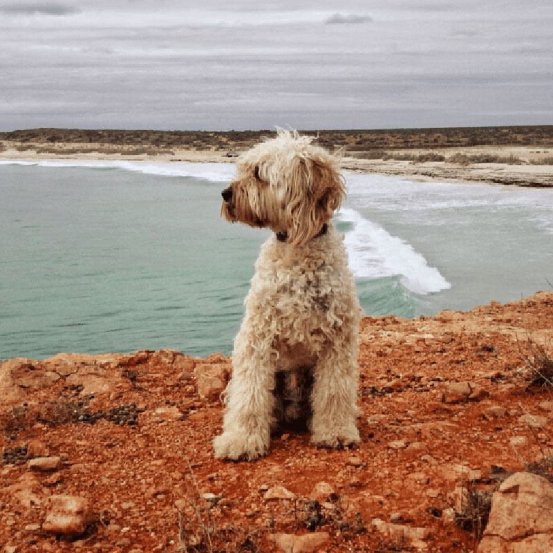 Dog sitting on a cliff face with the beach below in the background